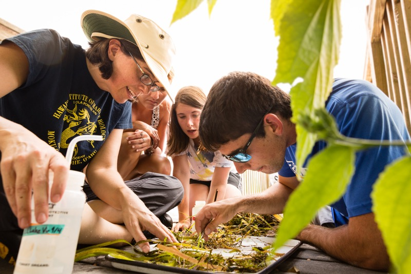 Students huddle around a picnic table covered in leaves and twigs, analyzing the foliage as part of an Environmental Studies course.